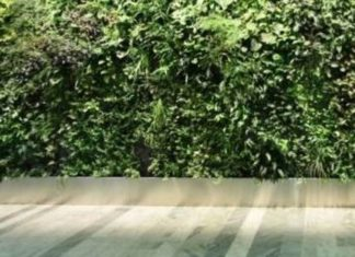 Déco intérieure, mur végétal, végétalisation